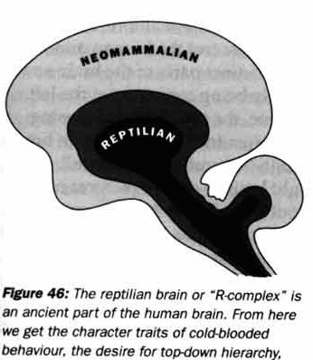 reptilian-brain