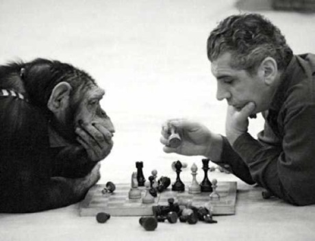 chimp_chess - 1