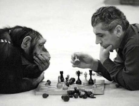 chimp_chess - 1